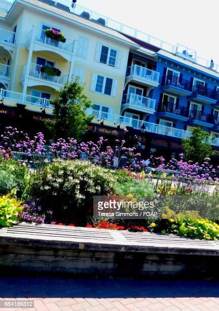 A summer urban garden