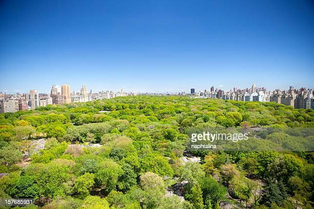 summer view of central park - midday stock pictures, royalty-free photos & images