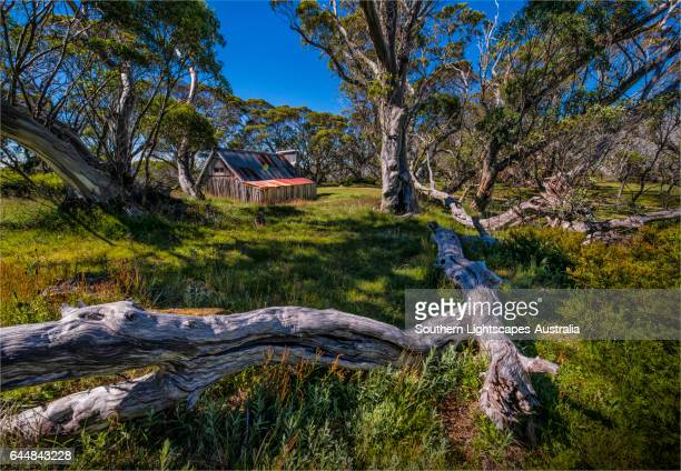 A summer view of Wallaces Hut in the Alpine region of north east Victoria, Australia.