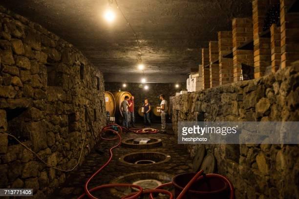 summer workers in vineyard wine cellar - heshphoto foto e immagini stock