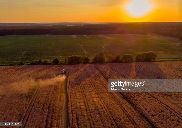 summerthree farming - marco secchi stock photos and pictures