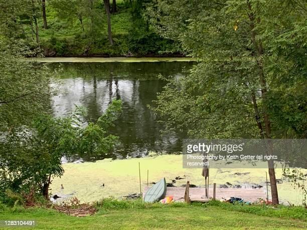 summertime green creek scene - ソーガーチーズ ストックフォトと画像
