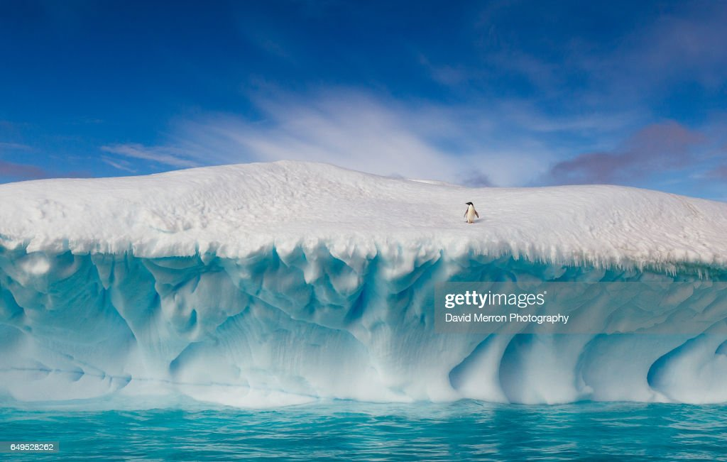 A lone Adélie penguin rests on top of an amazing iceberg. Antarctica