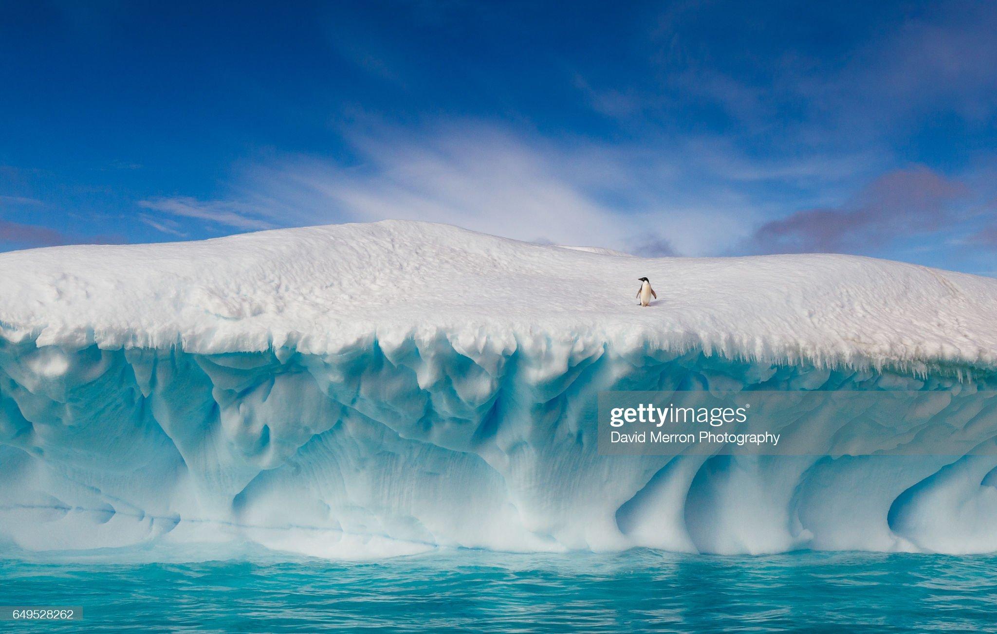 Summertime in Antarctica : Stock Photo