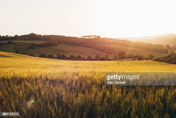summertime landscape in tuscany - yeowell stock pictures, royalty-free photos & images