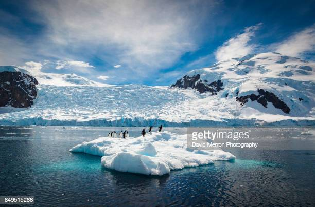 summertime - antarctique photos et images de collection