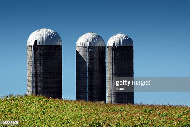 summertime silos - silo stock photos and pictures