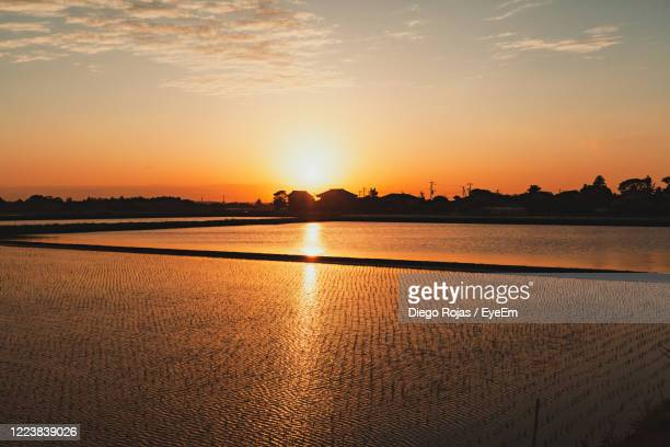 summertime sunset over rice paddies in japan - golden hour stock pictures, royalty-free photos & images