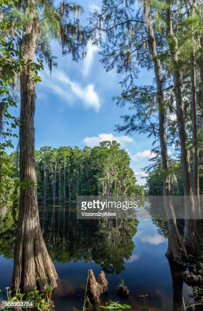 summertime view of shingle creek near kissimmee, florida - kissimmee stock pictures, royalty-free photos & images