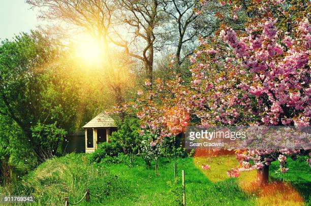 Summery garden