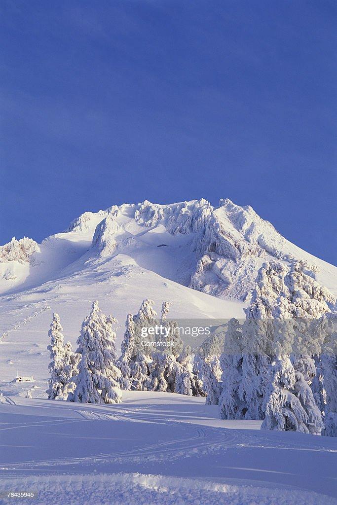 Summit of Mt. Hood , Oregon : Stockfoto