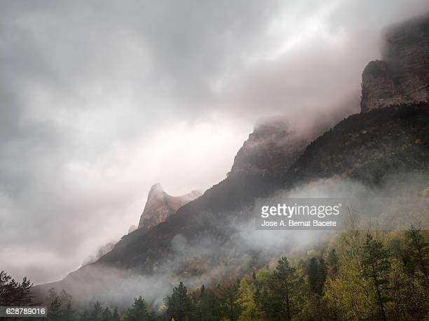 Summits of rocky and hillside mountains with forests of trees of expired leaf in autumn, with clouds of rain and dogs