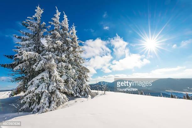 Carpathian Summy 一日を山