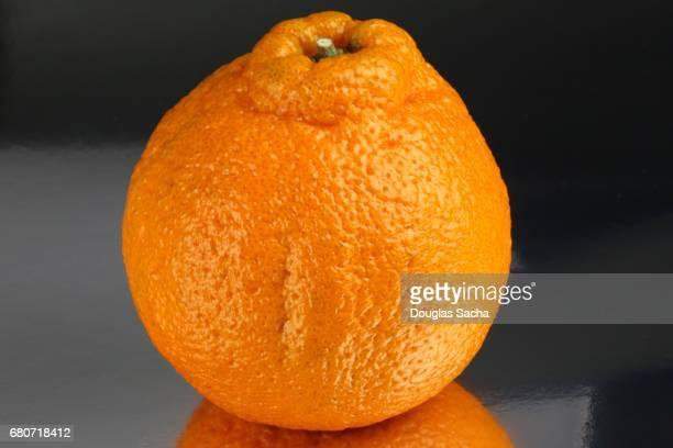 Sumo Mandarin Orange (citrus reticulata)