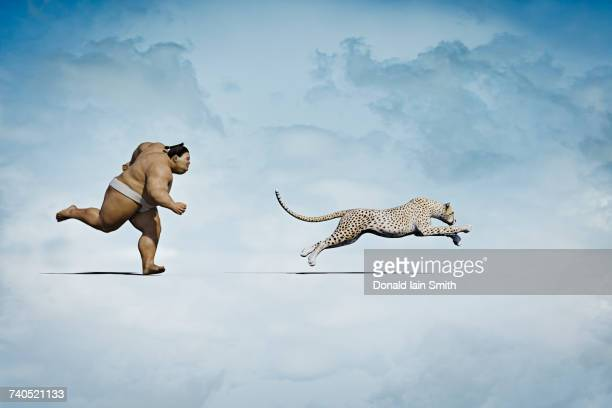 sumo wrestler chasing cheetah - sumo wrestling stock pictures, royalty-free photos & images