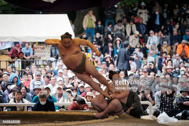 Sumo wrestlers perform acrobatics as prowrestling during 'Honozumo' ceremonial on April 16 2018 in Tokyo Japan This annual offering of a Sumo...