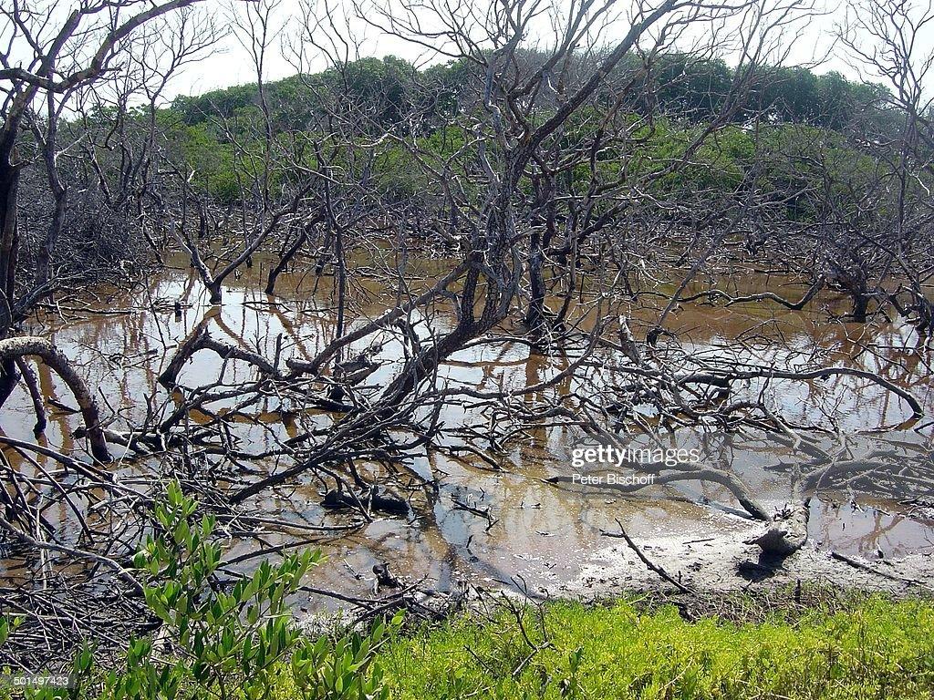 Sumpfloch Insel Isla Margarita Provinz Nueva Esparta Venezuela