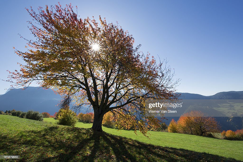 Sun and autumn colored tree : Stockfoto