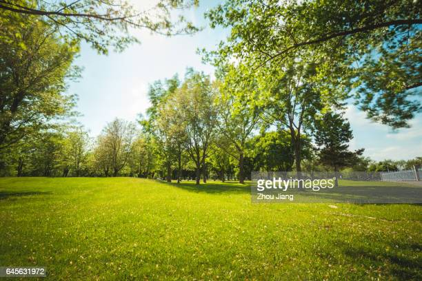 sun and grass - public park stock photos and pictures