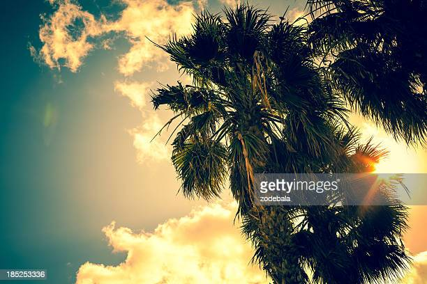 Sun and Palm Trees at Summer