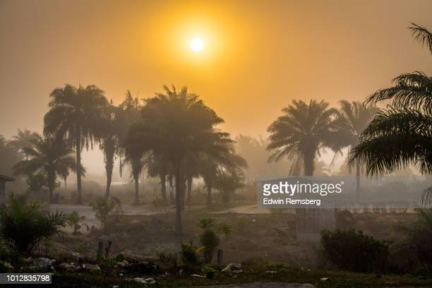 sun and palms - monrovia liberia stock pictures, royalty-free photos & images