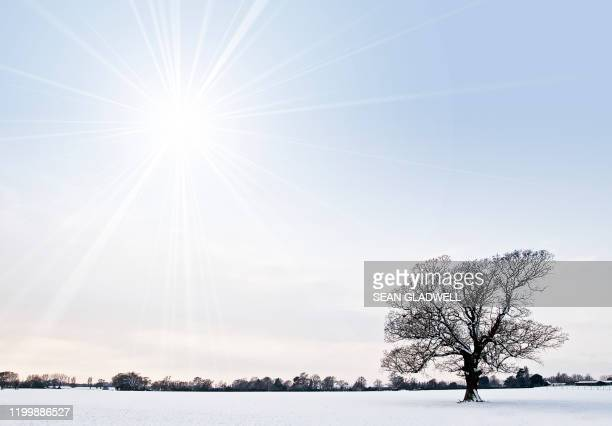 sun and tree in winter snow - day stock pictures, royalty-free photos & images