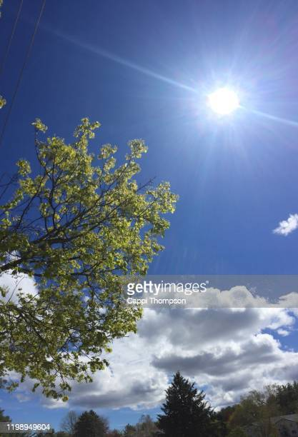 sun and trees during spring in laconia, new hampshire usa - cappi thompson stock pictures, royalty-free photos & images