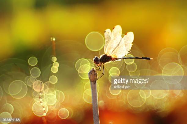 sun bath - mayfly stock pictures, royalty-free photos & images