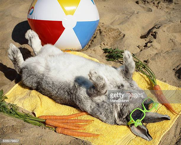 Big rabbit wearing sunglasses enjoys life on the beach, complete with beach ball, and carrot snacks. Some bunny definitely needed a vacation!