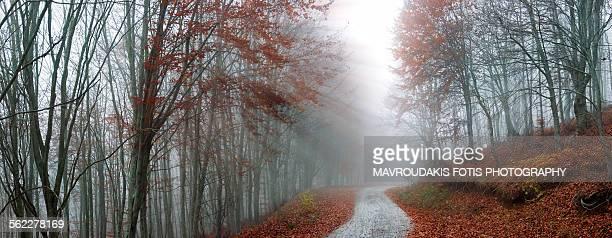 Sun beams in autumn forest