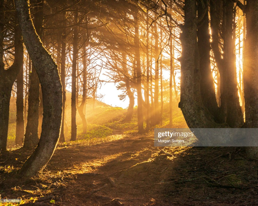 Sun beams in bright and foggy Autumn Forest : Stock Photo