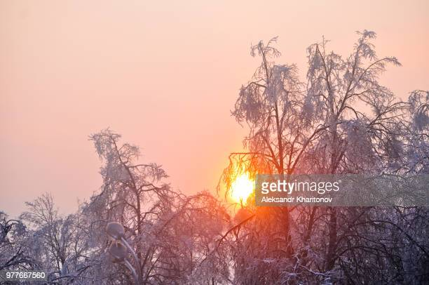 Sun behind trees in winter at sunset