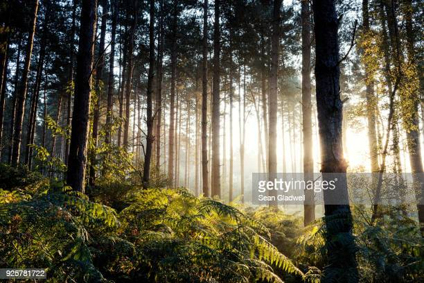 sun behind trees - beauty in nature stock pictures, royalty-free photos & images