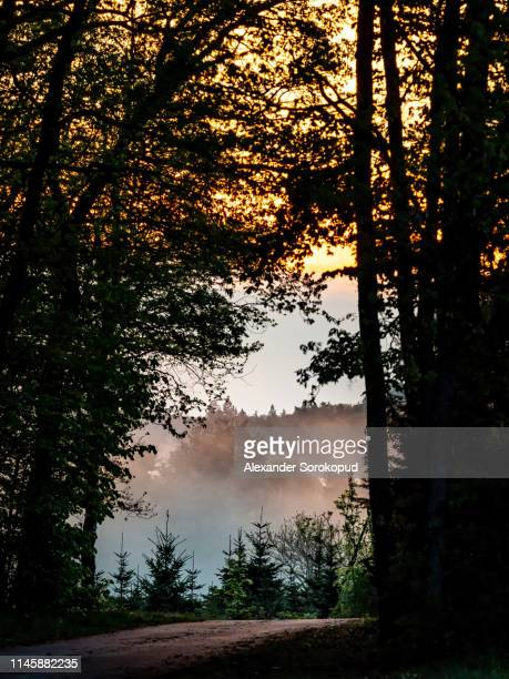 sun bems through the fog at sunset time, alsace - lorraine stock pictures, royalty-free photos & images