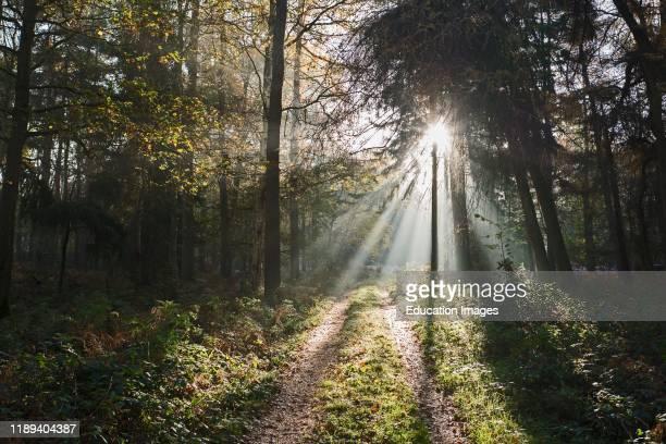 Sun bursting through on to path through woodland North Norfolk UK