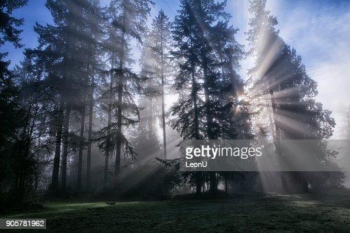 Sun bursts in the rain forest, Vancouver, Canada