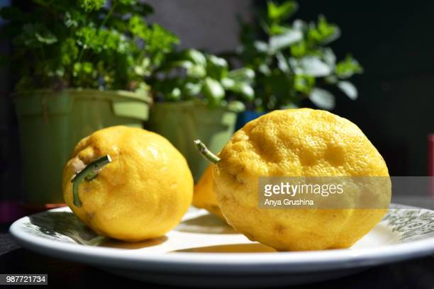 sun concentrated - lemon leaf stock photos and pictures
