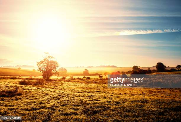 sun countryside - sunny stock pictures, royalty-free photos & images