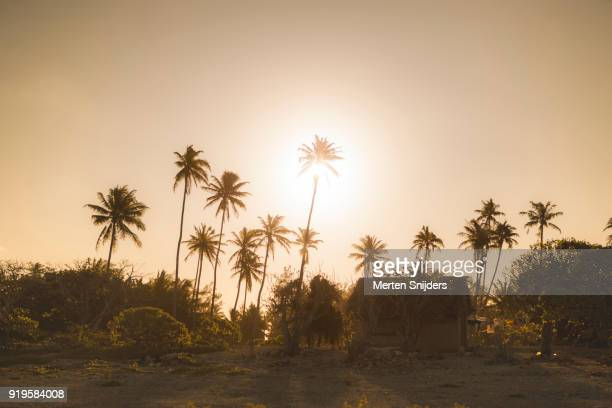 Sun directly behind palm tree in Polynesian beach hut setting