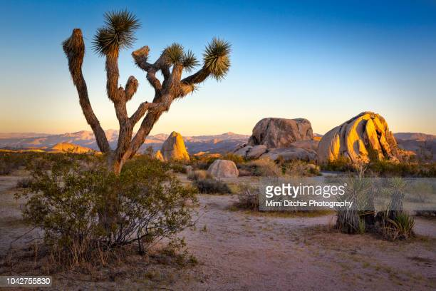 sun down at joshua tree national park - national landmark stock pictures, royalty-free photos & images