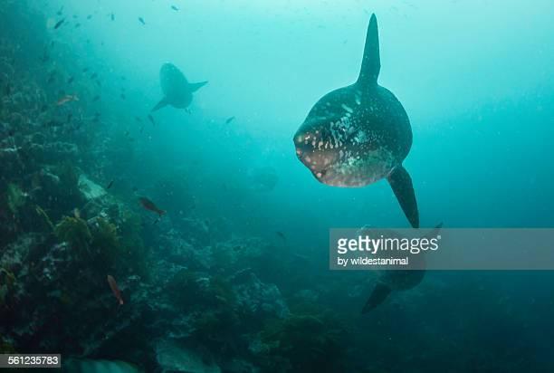 Sun Fish Foursome
