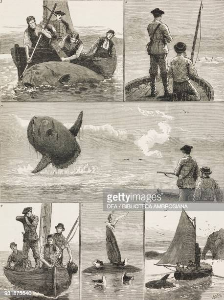 Sun fish shooting illustration from The Graphic volume XXVII no 703 May 19 1883