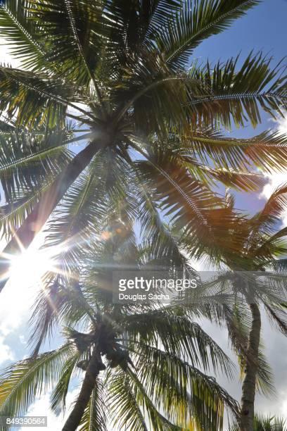 Sun glare through the overhead Palm Trees