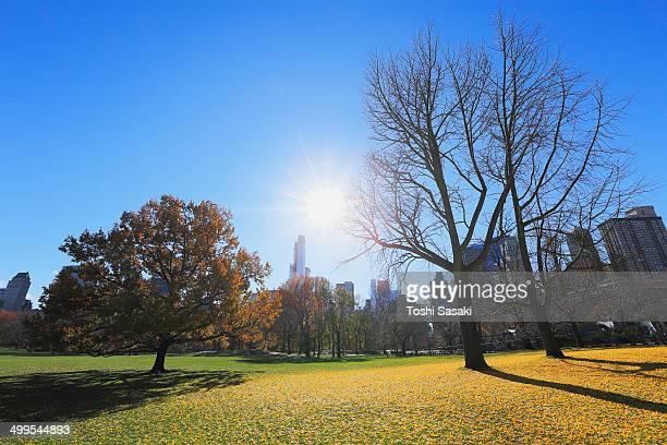 Sun illuminates fallen leaves from above Manhattan