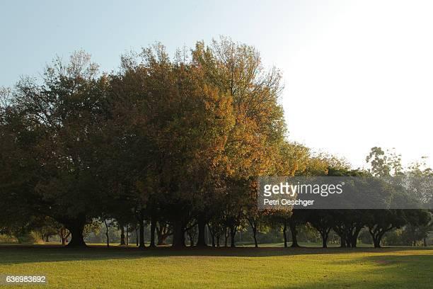 Sun kissed trees.