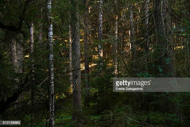 Sun light in forest