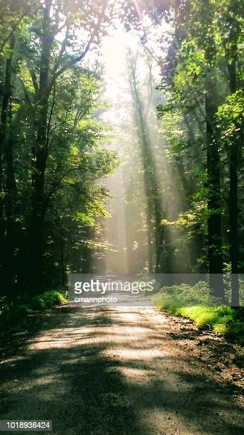 sun light streaming through tree along a gravel road - cmannphoto stock pictures, royalty-free photos & images