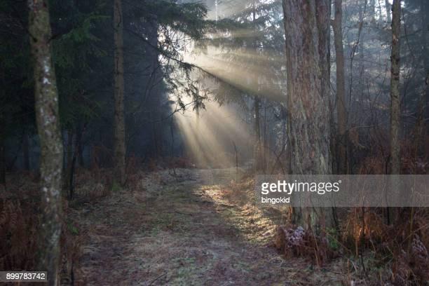 太陽の当たる森の小道