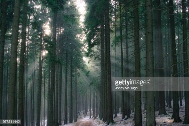 Sun pouring through trees in winter, Frankfurt, Germany