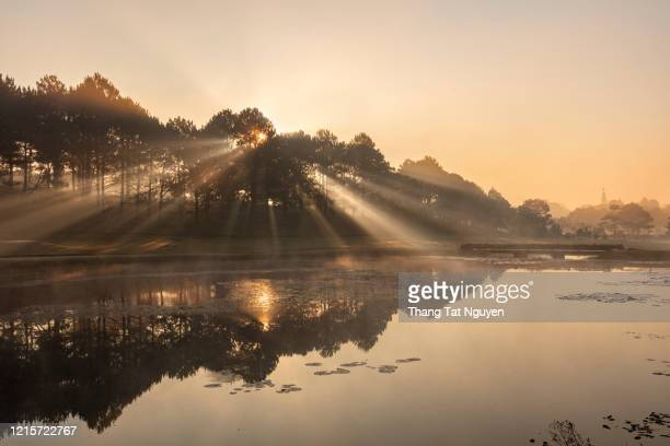 sun ray through pine forest by lake - shiny stock pictures, royalty-free photos & images